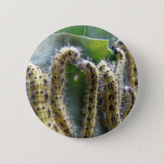 Hungry Cabbage White Caterpillars Button