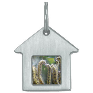 Hungry Cabbage White Caterpillars Pet Tag