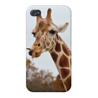 Hungry Giraffe Wild Animals Photo iPhone 4 Covers