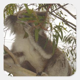 Hungry Koala Square Sticker