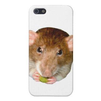Hungry Rat  iPhone 5/5S Cover