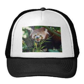 hungry Red panda Cap