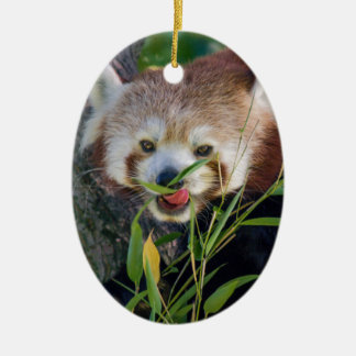 hungry Red panda Ceramic Oval Decoration