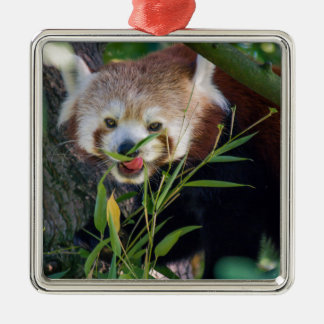 hungry Red panda Silver-Colored Square Decoration