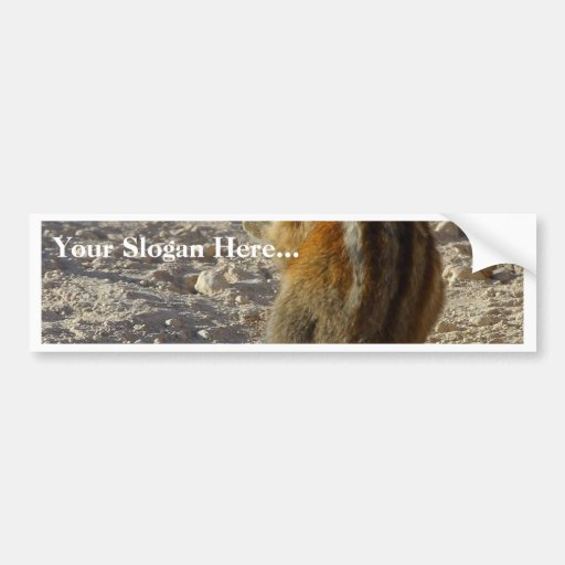 Hungry Squirrel Bumper Stickers