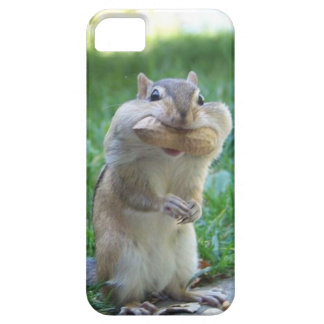 Hungry Squirrel iPhone 5 Cover
