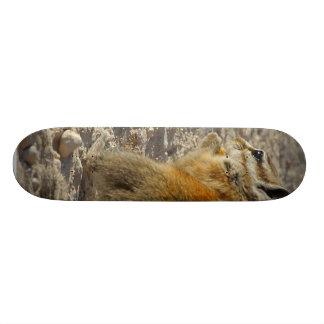 Hungry Squirrel Skateboard Decks