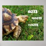 """Hungry Tortoise - """"Om nom nom"""""""