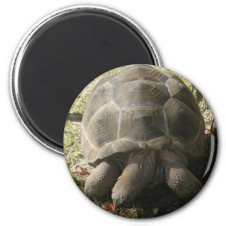HUNGRY TORTOISE ON A FALL STROLL. 6 CM ROUND MAGNET