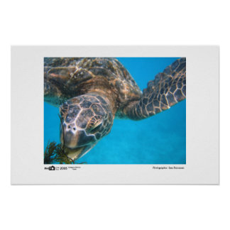 Hungry Turtle - Photo of the Year Category Winner Poster