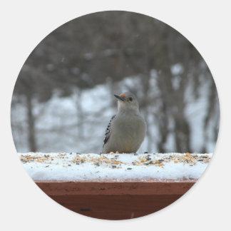 Hungry Woodpecker Sticker