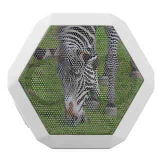 Hungry Zebra White Boombot Rex Bluetooth Speaker