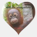 Hunt, a new orangutan orphan