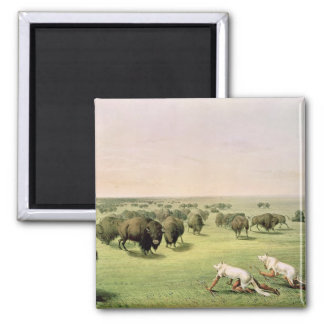 Hunting Buffalo Camouflaged Magnet