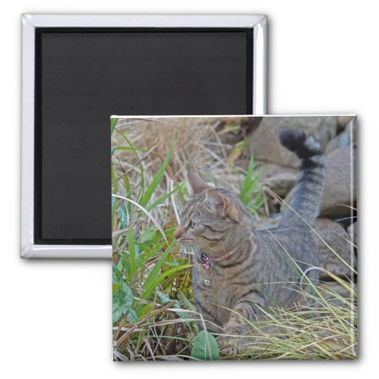 Hunting Cat Square Magnet