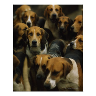 Hunting foxhounds, Galway Blazers, Ireland Poster
