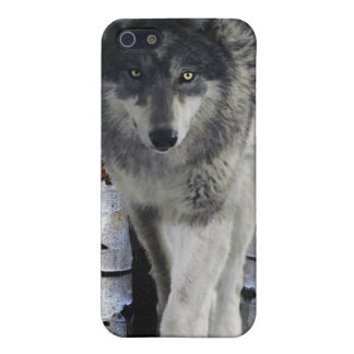 Hunting Grey Wolf Wildlife-supporter iPhone Case iPhone 5 Covers