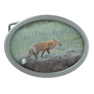 Hunting Red Fox Wildlife Photo Belt Buckle