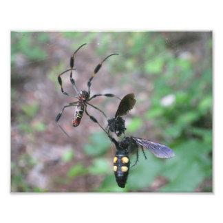 Hunting Spider Art Photo