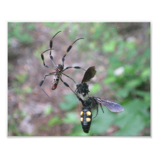 Hunting Spider Photo Print