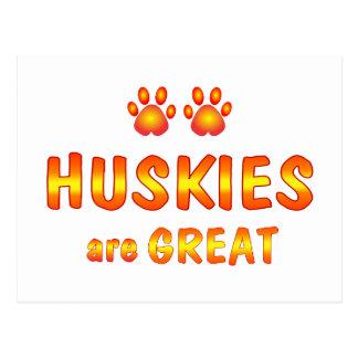 Huskies are Great Postcard