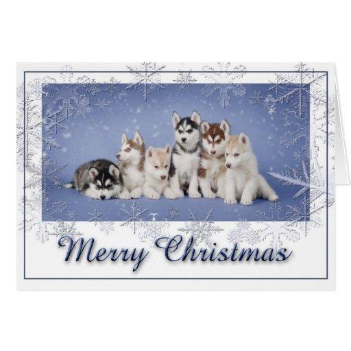 Husky Christmas Cards