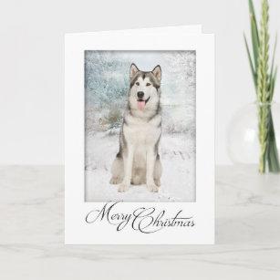 Husky Christmas Cards.Husky Christmas Cards