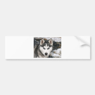 Husky dog bumper sticker