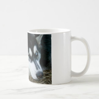 Husky Dog Coffee Mug