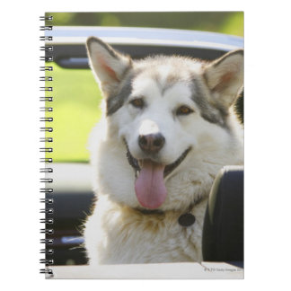 Husky dog from convertible notebook