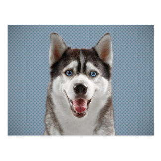 Husky Dog Monogram Photograph Postcard