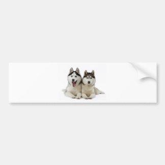 Husky Dogs Bumper Sticker