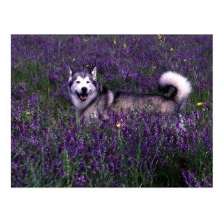 Husky in flowers postcard