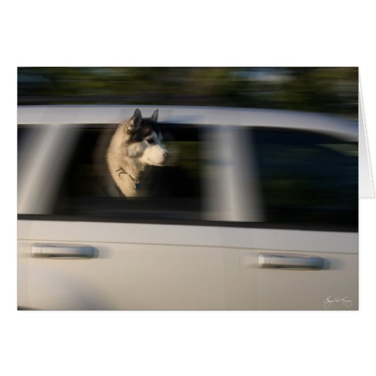 Husky in Motion - Card