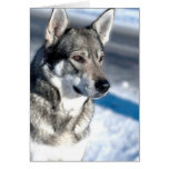 Husky in Snow Greeting Card