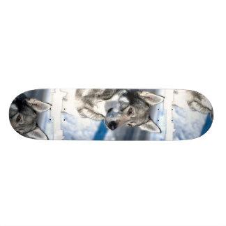 Husky in Snow Skateboard