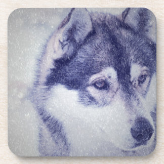 Husky in the snow coasters