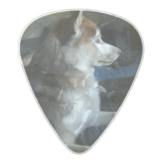 husky on the bed pick pearl celluloid guitar pick