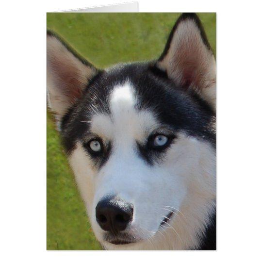 Husky photo Greeting Card