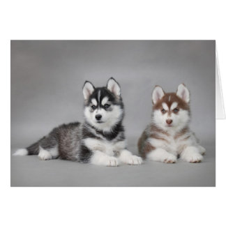 Husky puppies card