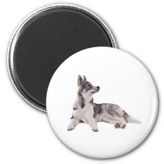 husky puppy 6 cm round magnet