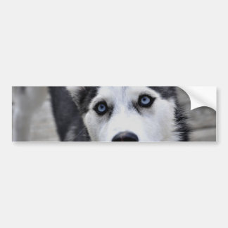 Husky Puppy Bumper Sticker