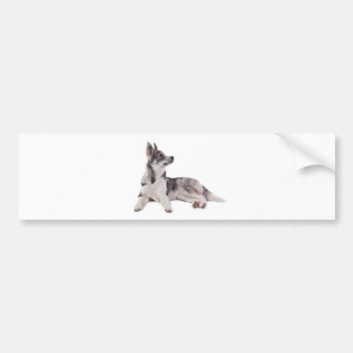 husky puppy bumper stickers