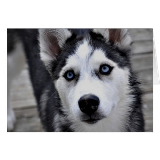 Husky Puppy Greeting Card