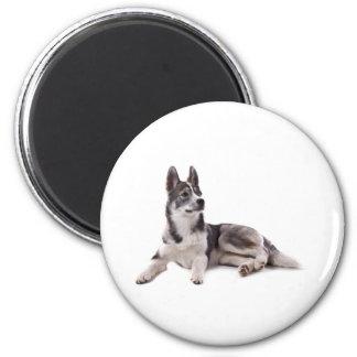 husky puppy fridge magnet