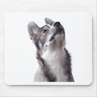 Husky puppy mouse pads