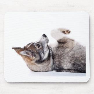 husky puppy mouse pad