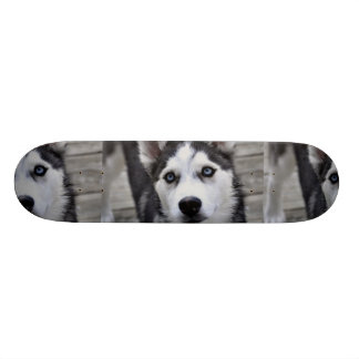 Husky Puppy Skateboard