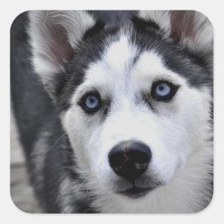 Husky Puppy Stickers
