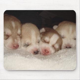 husky pups mouse mats
